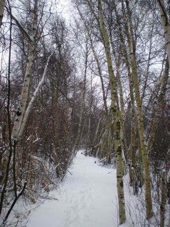 Fresh snow blankets the woodlands trail at Jamaica Bay Wildlife Refuge.