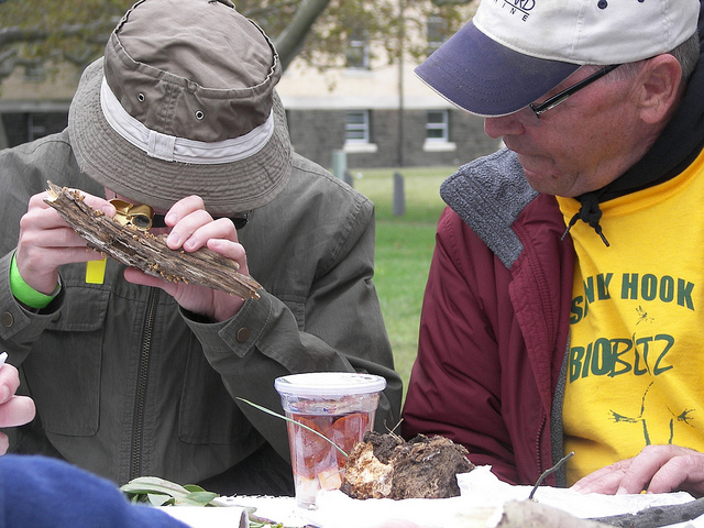 Have fun with fungi--or, help identify plants, birds or other forms of life at the Sandy Hook BioBlitz. Photo courtesy of the American Littoral Society.