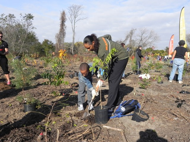 Volunteers planted thousands of trees at Floyd Bennett Field on Saturday, October 27. Anyone interested in volunteering to help the park recover after Hurricane Sandy can contact us via Gateway's Facebook page or on our Volunteer webpage.
