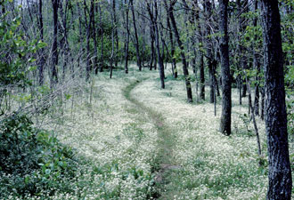 A Portion of the Appalachian Trail. Source: National Park Service.