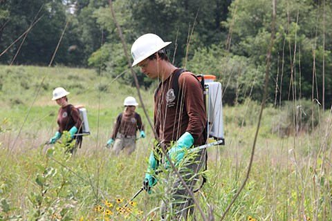 American Conservation Experience (ACE) members treat non-invasive vegetation.