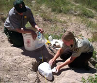 An employee and volunteer kneel on the ground to create a cover for an archeological find.