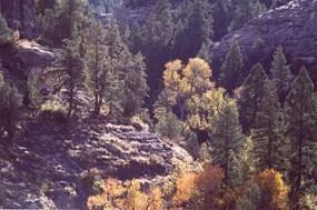 A photo of fall foliage from cave #5