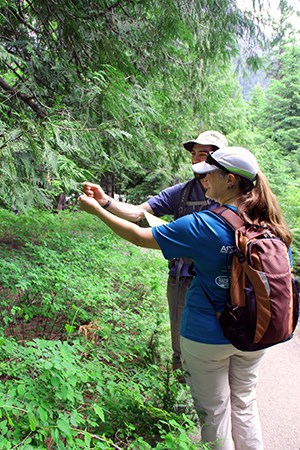 While on trail, two students in backpacks touch the needles of a conifer