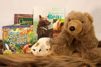 bear trunk contents: stuffed bear, books, bear skull and fur