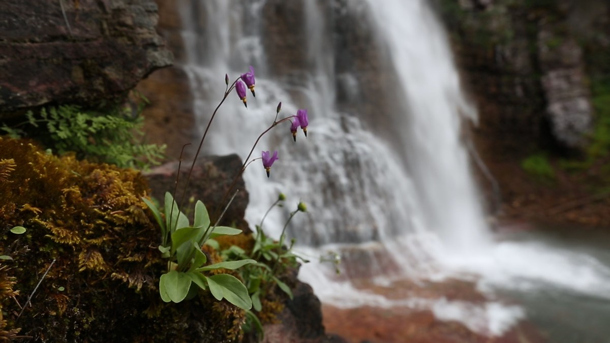 wildflowers grow on the banks of a river with a waterfall in the bacground