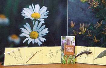 Field book and plant samples in front of photo of daisy