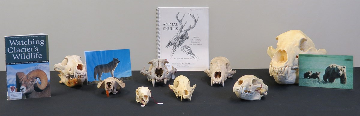 Skulls, books, and photos of animals arranged on table top