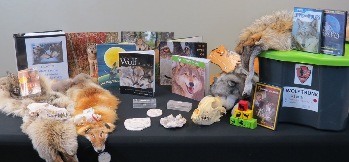 Books, furs, skulls, and other objects relating to wolves arranged on table