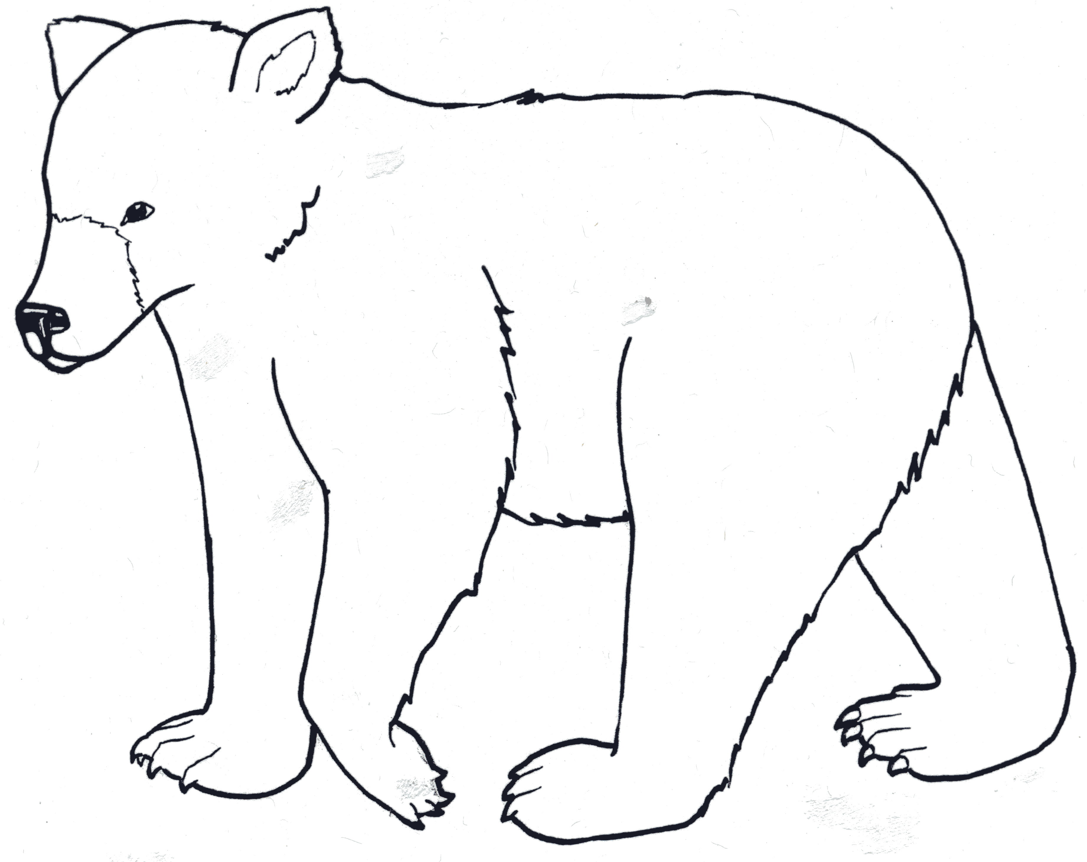 black bear coloring book picture