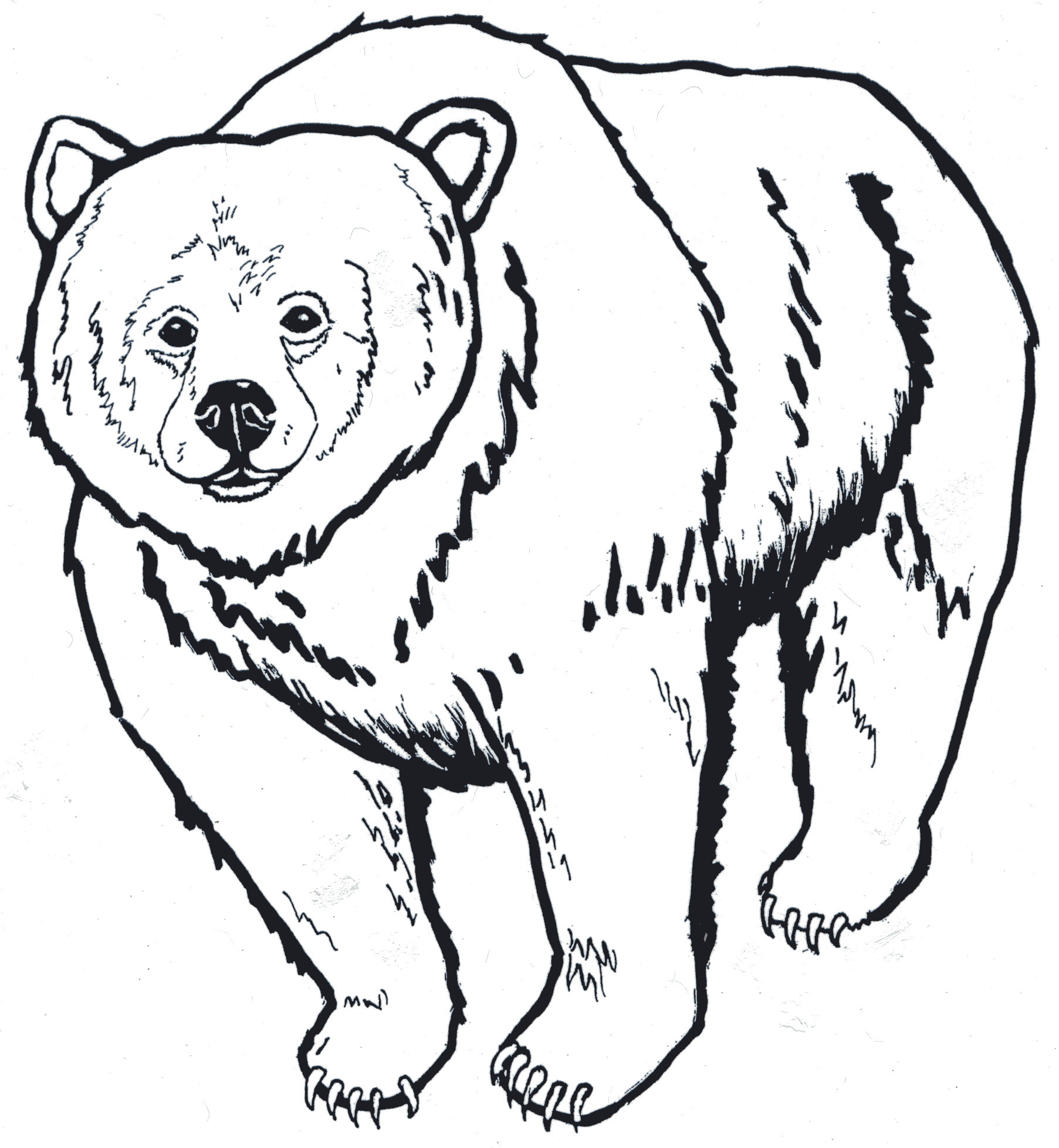Louisiana Black Bear Coloring Page  Printable Coloring Pages