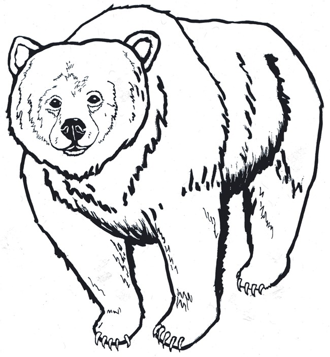 grizzly outline