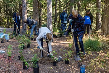 Students dig in clearing in forest surrounded by small potted plants