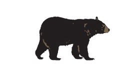 Illustration of a black bear