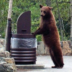 black bear at garbage can