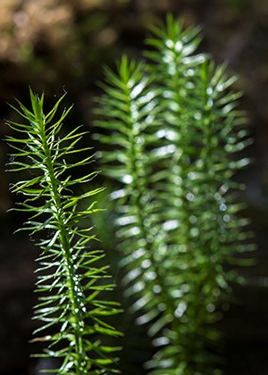 thin spiny green plant