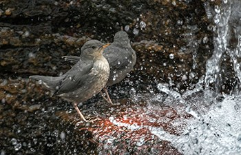 grey birds stand next to splashing waterfall