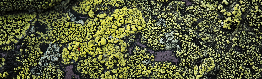 close-up of green lichen on rock