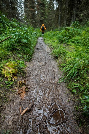 tracks left in mud on wet forest trail