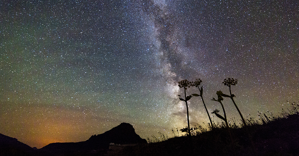 Mountain And 3 Flowers Silhouetted By Star Filled Sky