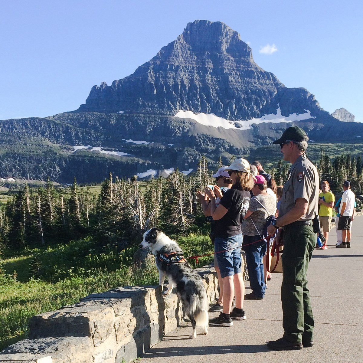 Ranger Mark Biel and Gracie at Logan Pass, Glacier National Park, August 2016. Gracie is looking at bighorn sheep grazing a short distance out of the parking lot after she and Ranger Mark moved them there