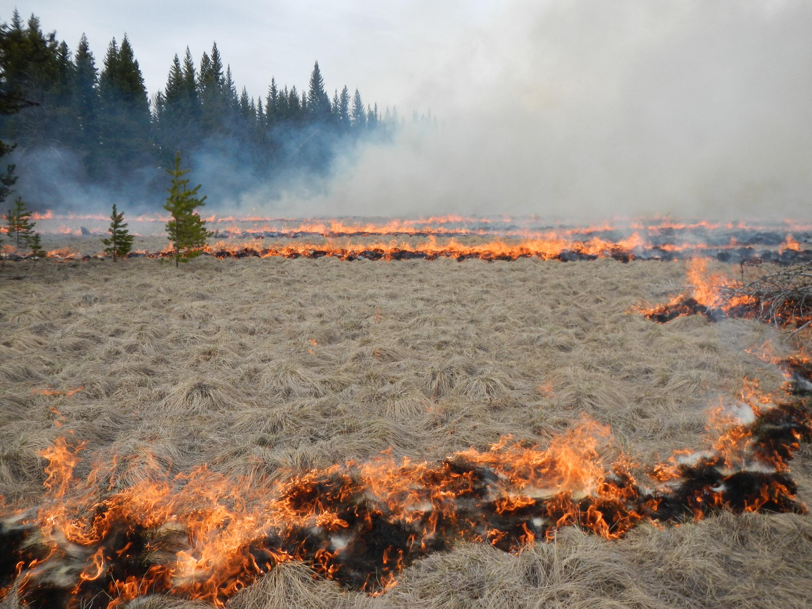 Prescribed Burn Planned In North Fork Glacier National