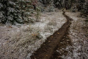 A trail through the forest with snow around it.