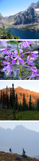 Four images of Glacier's backcountry