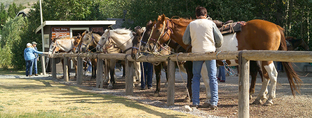 wrangler stands by line of horses tied to rail