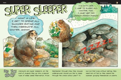 marmot illustration on Super Sleeper wayside panel