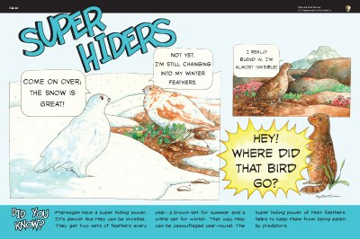 Ptarmigan illustrations on Super Hiders wayside panel