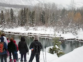 snowshoers looking at a beaver lodge