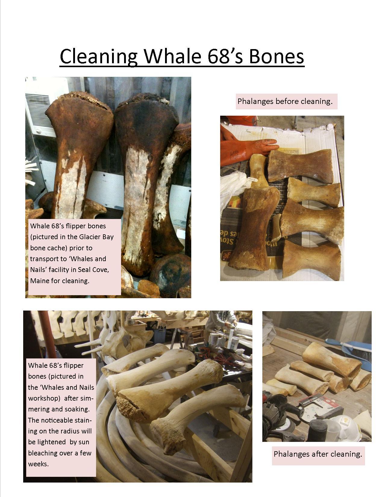 Simmering And Soaking Whale Bones Glacier Bay National Park Preserve U S National Park Service The Return Of Whale 68