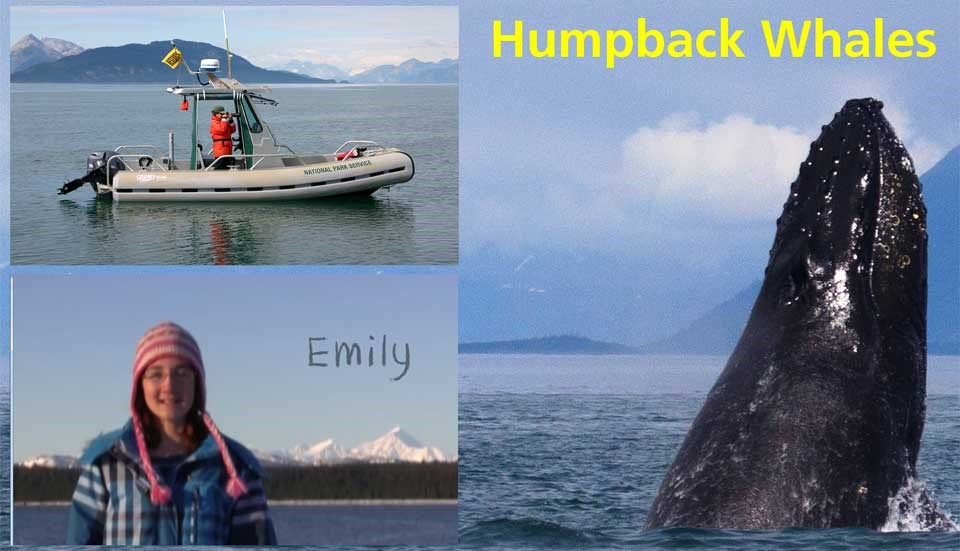 Humpback Whale Identification Cover