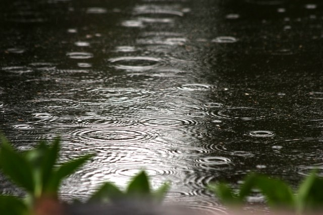 rain drops create ripples on a pond