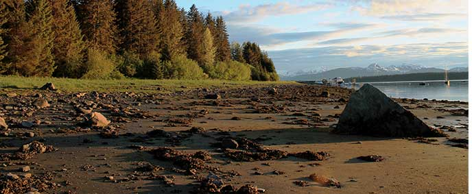 low tide near Bartlett Cove