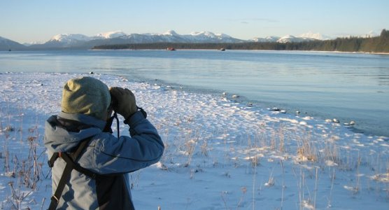 A cold day on the Christmas Bird count in Glacier bay