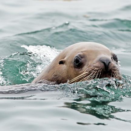 Mammals Glacier Bay National Park Amp Preserve U S