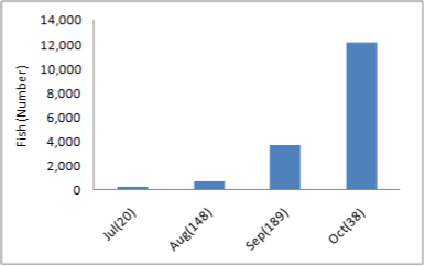 a bar graph showing the spawning times of chum salmon from July to October. The month with the highest fish count is October
