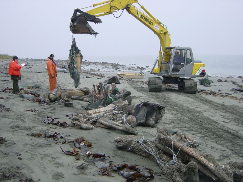 An excavator moves large nets of Whale 68's bones to a boat just off shore.