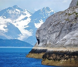 a cliff with marine life attached near the water and mountains in the background