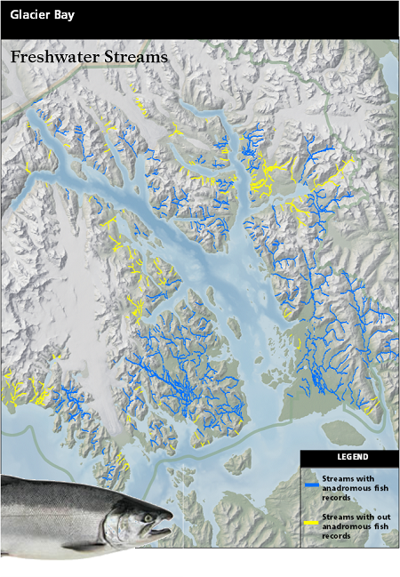 a map depicting the streams that are recorded to contain anadromous fish in Glacier Bay and the streams that are lacking information