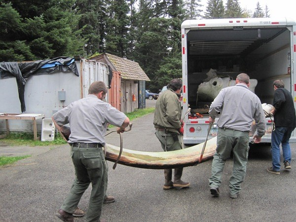 Park team moves humpback whale mandible
