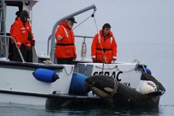 NPS staff tow killer whale to Bartlett Cove