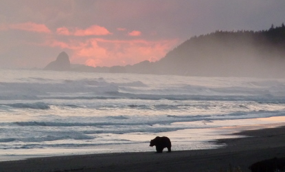 brown bear on coast