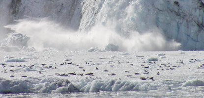 Johns Hopkins glacier calving and harbor seals on ice