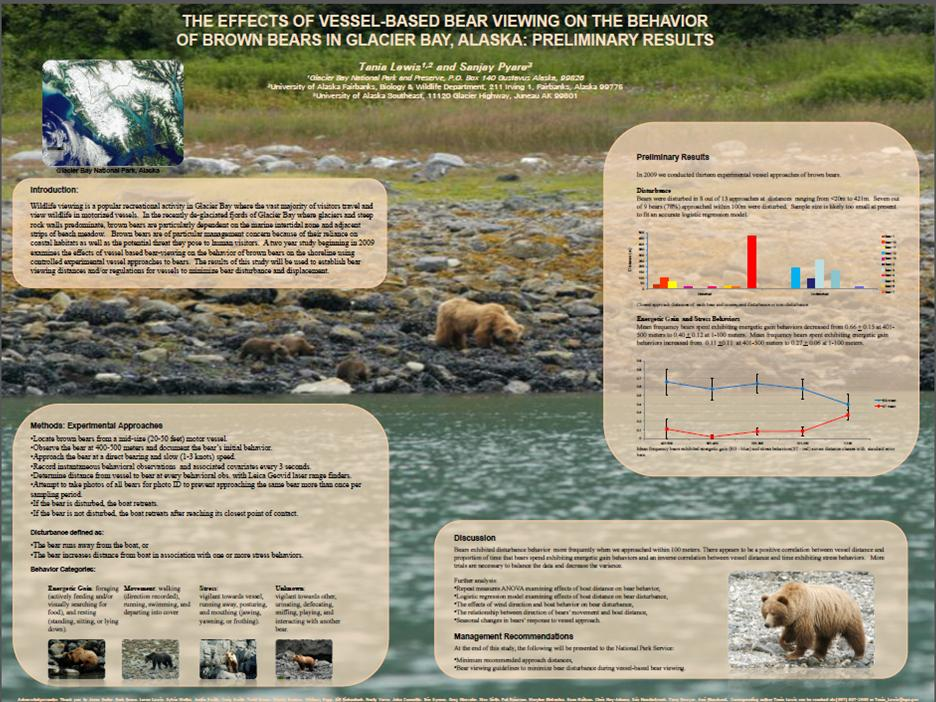 bear disturbance poster