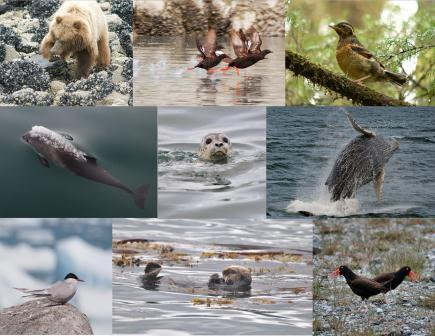 The sounds of Glacier Bay's animals have been captured in the soundscape project.