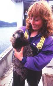 Researcher holding anaesthetized sea otter