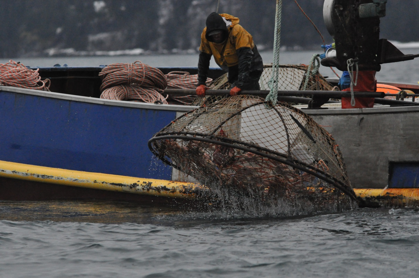 workers pulling up a crab pot on a boat